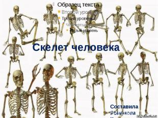 Скелет человека Составила Романова Ксения