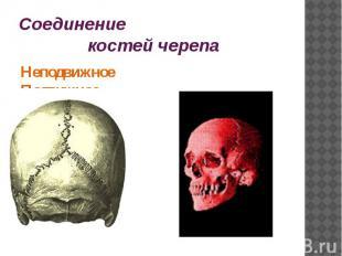 Соединение костей черепаНеподвижное Подвижное