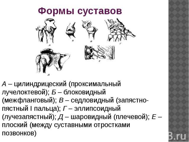 А– цилиндрицеский (проксимальный лучелоктевой);Б– блоковидный (межфланговый);В– седловидный (запястно-пястный I пальца);Г– эллипсоидный (лучезапястный);Д– шаровидный (плечевой);Е– плоский (между суставными отростками позвонков)