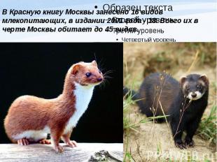 В Красную книгу Москвы занесено 16 видов млекопитающих, в издании 2001 года - 18