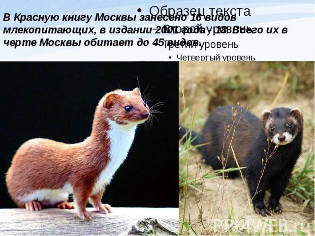 В Красную книгу Москвы занесено 16 видов млекопитающих, в издании 2001 года - 18. Всего их в черте Москвы обитает до 45 видов.