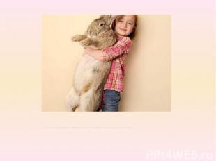 Он является кроликом породыКонтинентальный Гиганти имеетрост 1,22 метра. Нес