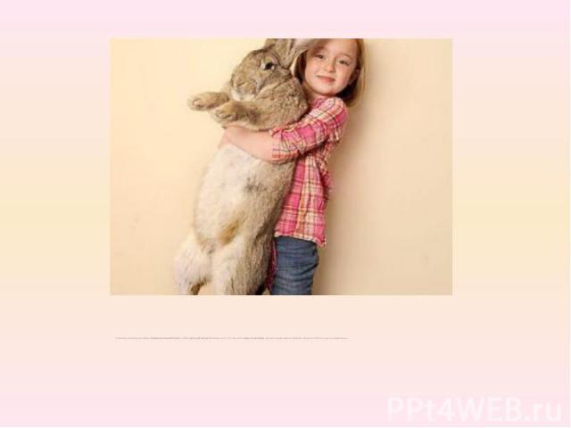 Он является кроликом породыКонтинентальный Гиганти имеетрост 1,22 метра. Несмотря на то, что ему всеголишь 13 месяцев, кролик съедает дюжину моркови, несколько яблок и капусту каждый день.