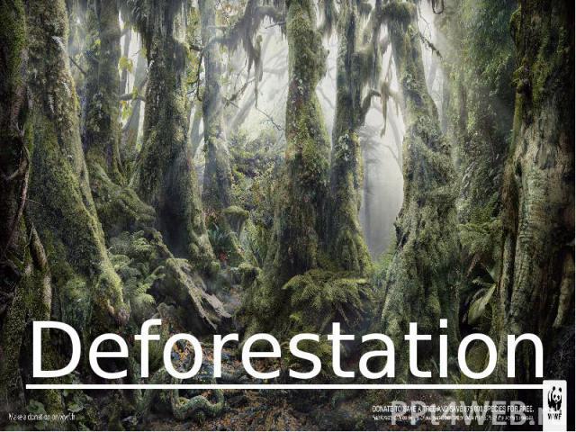Вырубка лесов доклад на английском 4845