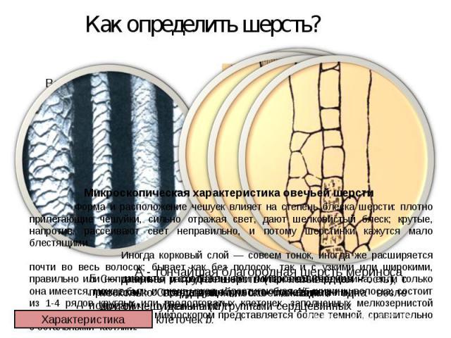 Как определить шерсть? Микроскопическая характеристика овечьей шерсти Форма и расположение чешуек влияет на степень блеска шерсти: плотно прилегающие чешуйки, сильно отражая свет, дают шелковистый блеск; крутые, напротив, рассеивают свет неправильно…