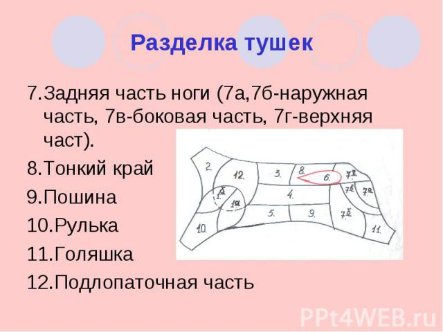 Разделка тушек 7.Задняя часть ноги (7а,7б-наружная часть, 7в-боковая часть, 7г-верхняя част).8.Тонкий край9.Пошина10.Рулька11.Голяшка12.Подлопаточная часть