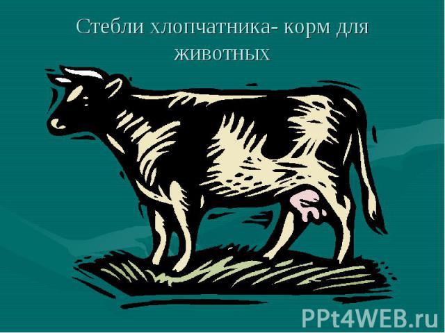 Стебли хлопчатника- корм для животных