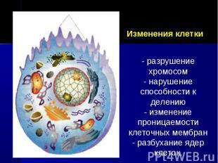 Изменения клетки - разрушение хромосом- нарушение способности к делению- изменен