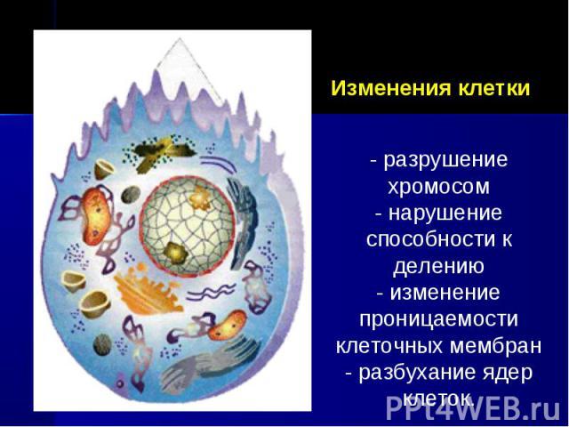 Изменения клетки - разрушение хромосом- нарушение способности к делению- изменение проницаемости клеточных мембран- разбухание ядер клеток.