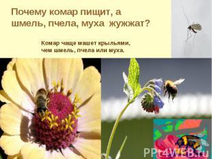 Почему комар пищит, а шмель, пчела, муха жужжат?Комар чаще машет крыльями, чем ш