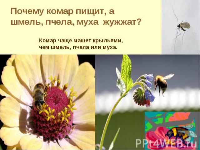 Почему комар пищит, а шмель, пчела, муха жужжат?Комар чаще машет крыльями, чем шмель, пчела или муха.