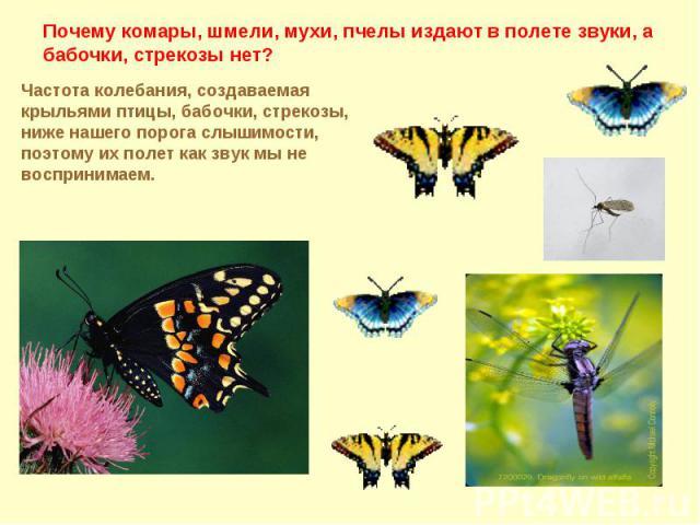Почему комары, шмели, мухи, пчелы издают в полете звуки, а бабочки, стрекозы нет?Частота колебания, создаваемая крыльями птицы, бабочки, стрекозы, ниже нашего порога слышимости, поэтому их полет как звук мы не воспринимаем.