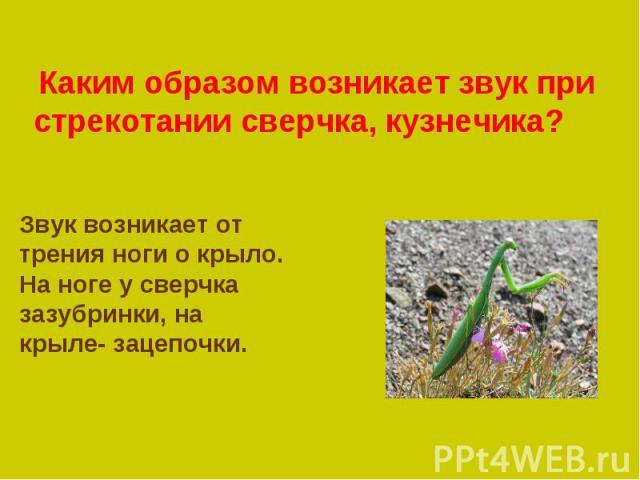Каким образом возникает звук при стрекотании сверчка, Звук возникает от трения ноги о крыло. На ноге у сверчка зазубринки, на крыле- зацепочки.кузнечика?