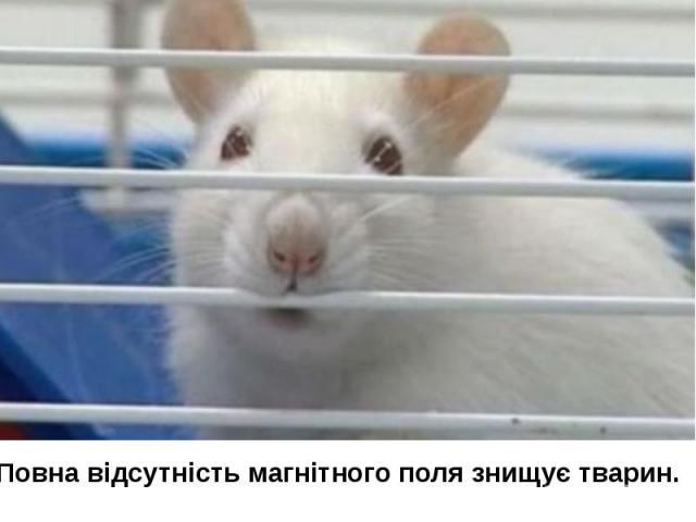 Повна відсутність магнітного поля знищує тварин.