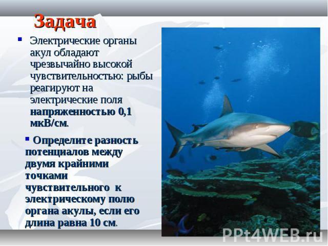 Задача Электрические органы акул обладают чрезвычайно высокой чувствительностью: рыбы реагируют на электрические поля напряженностью 0,1 мкВ/см. Определите разность потенциалов между двумя крайними точками чувствительного к электрическому полю орган…
