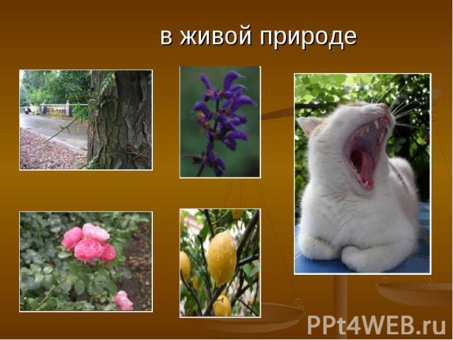 в живой природе