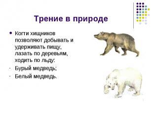 Трение в природе Когти хищников позволяют добывать и удерживать пищу, лазать по