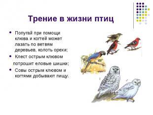 Трение в жизни птиц Попугай при помощи клюва и когтей может лазать по ветвям дер