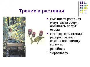 Трение и растения Вьющиеся растения могут расти вверх, обвиваясь вокруг опоры;Не