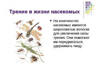Трение в жизни насекомых На конечностях насекомых имеются шероховатые волоски дл