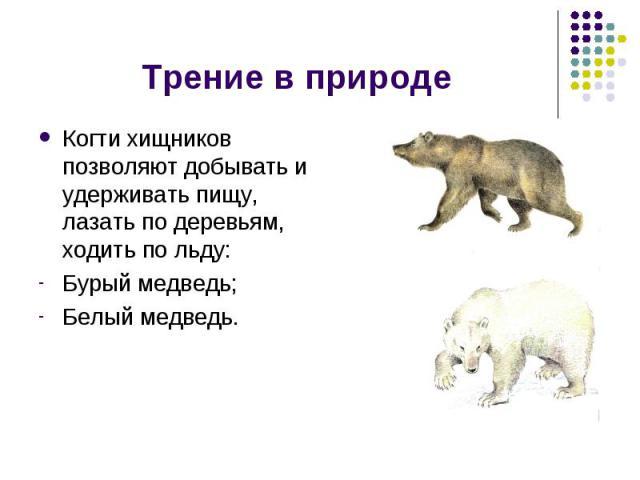Трение в природе Когти хищников позволяют добывать и удерживать пищу, лазать по деревьям, ходить по льду:Бурый медведь;Белый медведь.