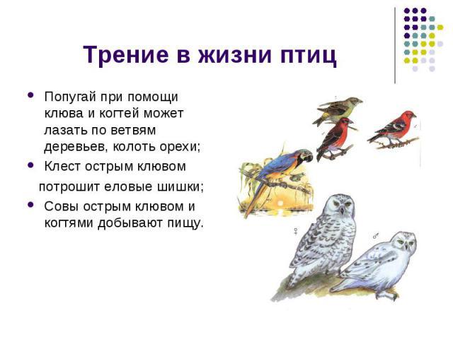Трение в жизни птиц Попугай при помощи клюва и когтей может лазать по ветвям деревьев, колоть орехи;Клест острым клювом потрошит еловые шишки;Совы острым клювом и когтями добывают пищу.