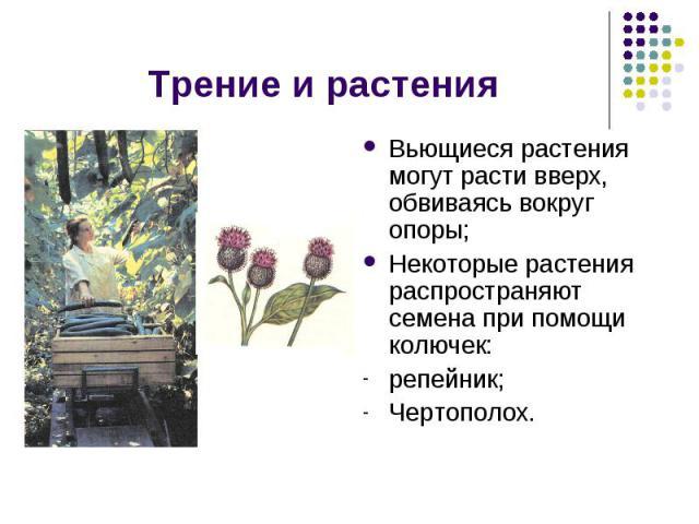 Трение и растения Вьющиеся растения могут расти вверх, обвиваясь вокруг опоры;Некоторые растения распространяют семена при помощи колючек: репейник;Чертополох.