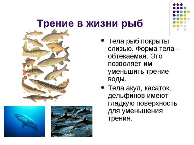 Трение в жизни рыб Тела рыб покрыты слизью. Форма тела – обтекаемая. Это позволяет им уменьшить трение воды.Тела акул, касаток, дельфинов имеют гладкую поверхность для уменьшения трения.