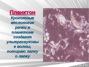 ПланктонКрохотные веслоногие рачки в планктоне создают ультразвуковые волны, пот