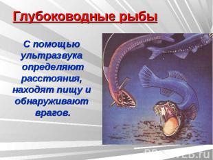 Глубоководные рыбы С помощью ультразвука определяютрасстояния, находят пищу и об