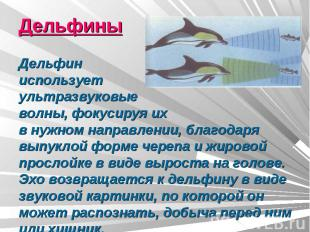 ДельфиныДельфин использует ультразвуковыеволны, фокусируя ихв нужном направлении