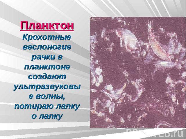 ПланктонКрохотные веслоногие рачки в планктоне создают ультразвуковые волны, потираю лапку о лапку