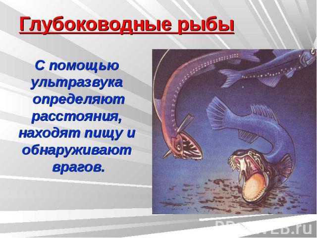 Глубоководные рыбы С помощью ультразвука определяютрасстояния, находят пищу и обнаруживают врагов.