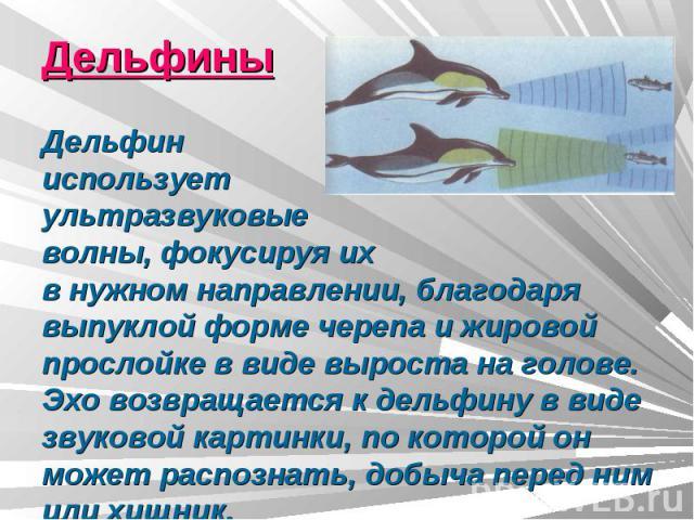 ДельфиныДельфин использует ультразвуковыеволны, фокусируя ихв нужном направлении, благодаря выпуклой форме черепа и жировой прослойке в виде выроста на голове. Эхо возвращается к дельфину в виде звуковой картинки, по которой он может распознать, доб…