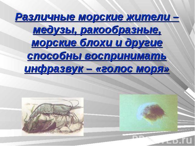 Различные морские жители – медузы, ракообразные, морские блохи и другие способны воспринимать инфразвук – «голос моря»