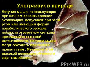 Ультразвук в природе Летучие мыши, использующие при ночном ориентировании эхолок