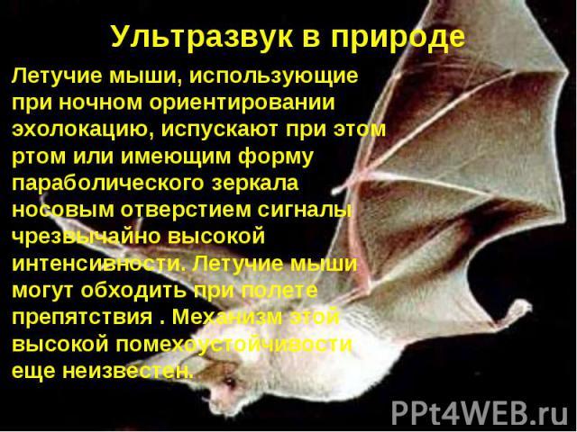 Ультразвук в природе Летучие мыши, использующие при ночном ориентировании эхолокацию, испускают при этом ртом или имеющим форму параболического зеркала носовым отверстием сигналы чрезвычайно высокой интенсивности. Летучие мыши могут обходить при пол…