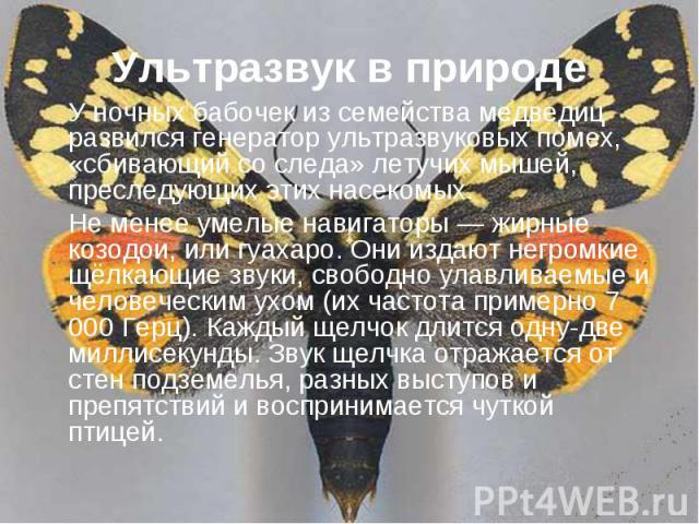 Ультразвук в природе У ночных бабочек из семейства медведиц развился генератор ультразвуковых помех, «сбивающий со следа» летучих мышей, преследующих этих насекомых.Не менее умелые навигаторы — жирные козодои, или гуахаро. Они издают негромкие щёлка…