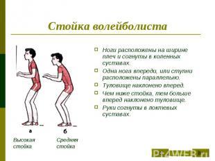 Стойка волейболиста Ноги расположены на ширине плеч и согнуты в коленных сустава