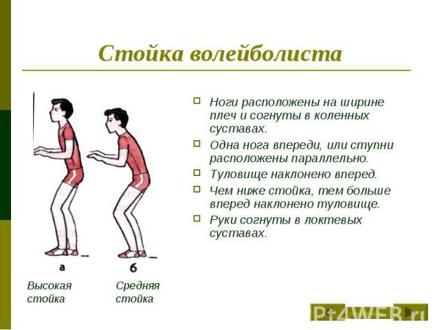 Стойка волейболиста Ноги расположены на ширине плеч и согнуты в коленных суставах. Одна нога впереди, или ступни расположены параллельно.Туловище наклонено вперед.Чем ниже стойка, тем больше вперед наклонено туловище.Руки согнуты в локтевых суставах.