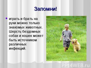 Запомни! играть и брать на руки можно только знакомых животных. Шерсть бездомных