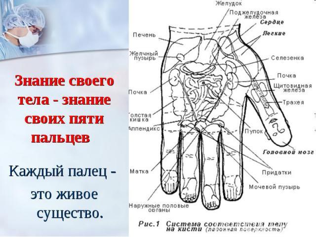 Знание своего тела - знание своих пяти пальцев Каждый палец - это живое существо.