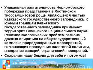 Уникальная растительность Черноморского побережья представлена в Хостинской тисо