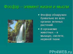 Фосфор – элемент жизни и мысли Фосфор обнаружен буквально во всех органах зелены