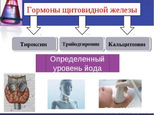 Гормоны щитовидной железы Определенный уровень йода