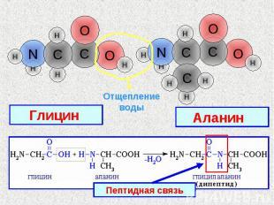 Отщепление воды Глицин Аланин Пептидная связь