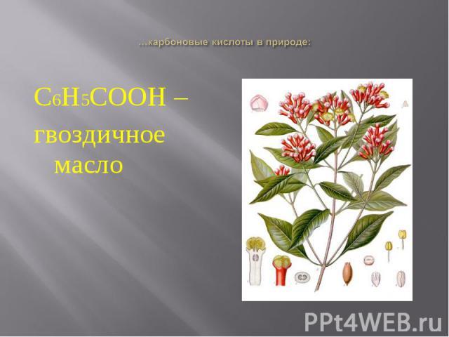 С6Н5СООН – С6Н5СООН – гвоздичное масло