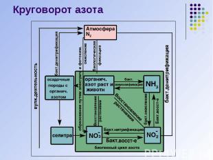 Круговорот азота