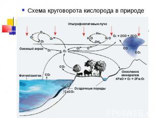 Схема круговорота кислорода в природе