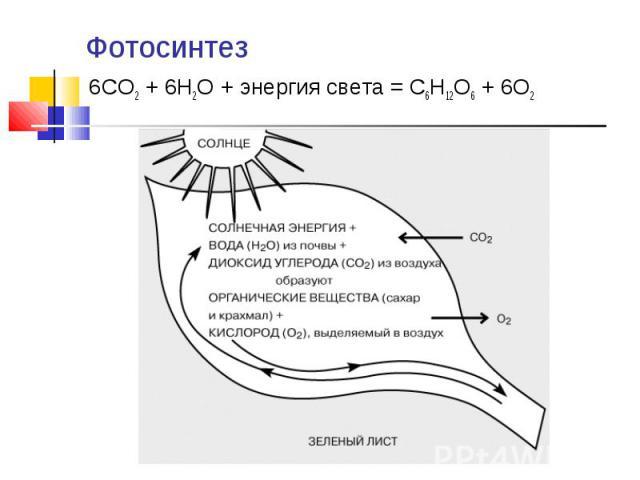 Фотосинтез 6CO2 + 6H2O + энергия света = C6H12O6 + 6O2